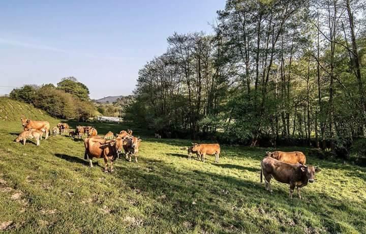 Gastronomía de Asturias:nuestra ternera asturiana